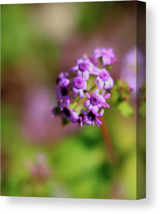 Pink Canvas Print featuring the photograph Pink Flowers . 40d4800 by Wingsdomain Art and Photography
