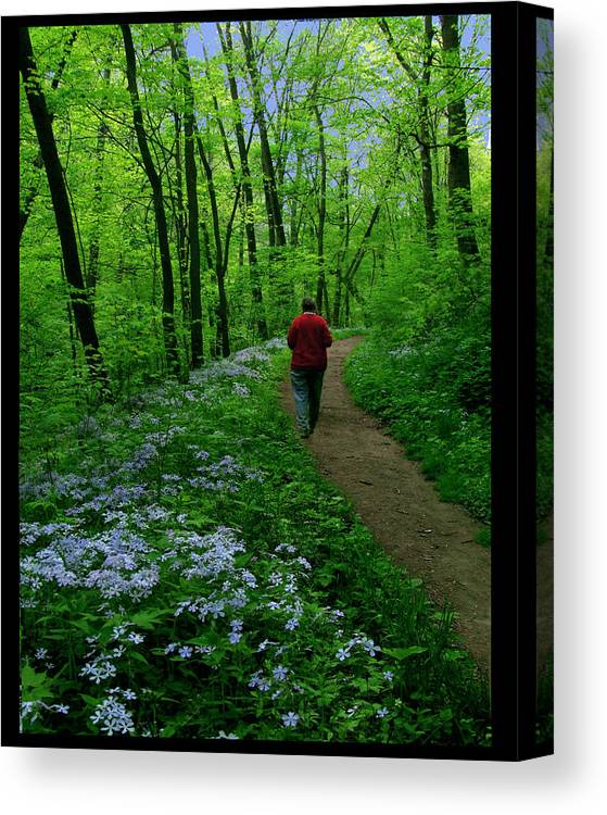 Wildflowers Canvas Print featuring the photograph Spring Walker by Diana Ludwig