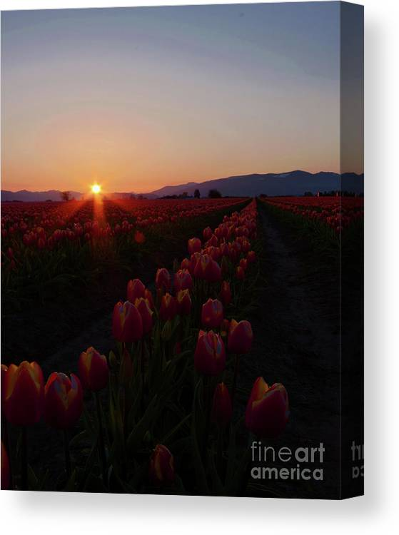 Sunrise Canvas Print featuring the photograph Sunstar by Nichole Peterson