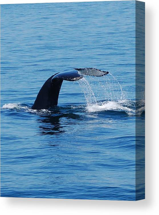 Whales Canvas Print featuring the photograph Whales Tale by Lisa Kane