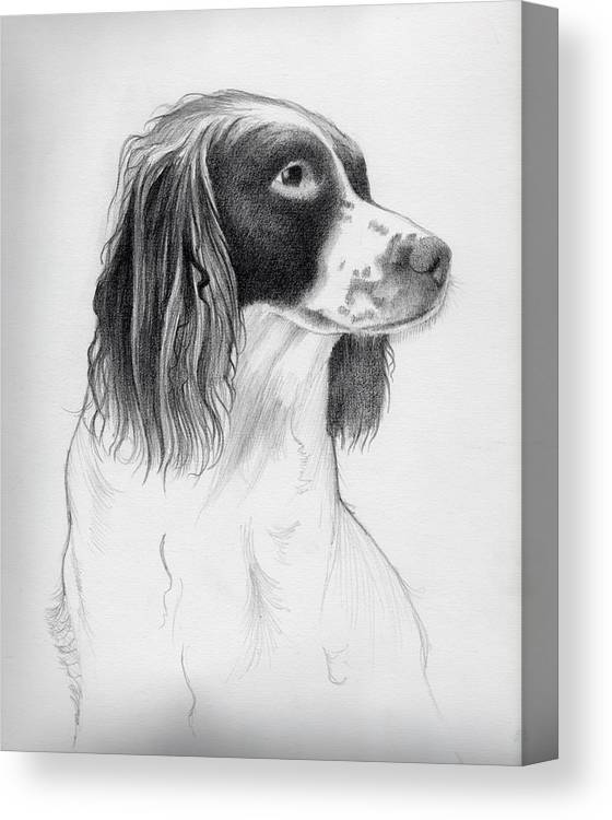 Coco Canvas Print featuring the drawing Coco by Ashley Jennings