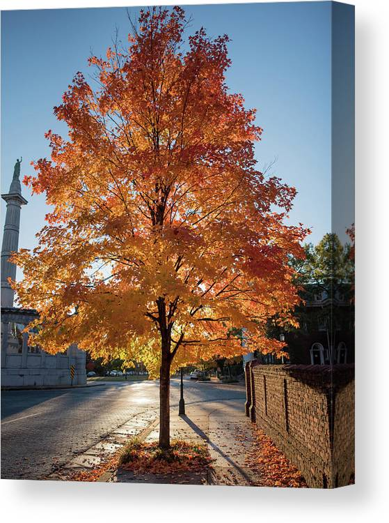 Fall Tree Canvas Print featuring the photograph Welcome To Fall In Richmond Va by Doug Ash