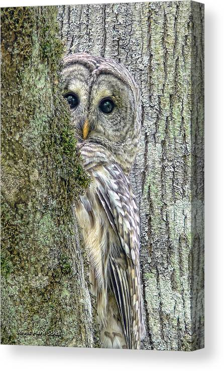 Owl Canvas Print featuring the photograph Barred Owl Peek a Boo by Jennie Marie Schell