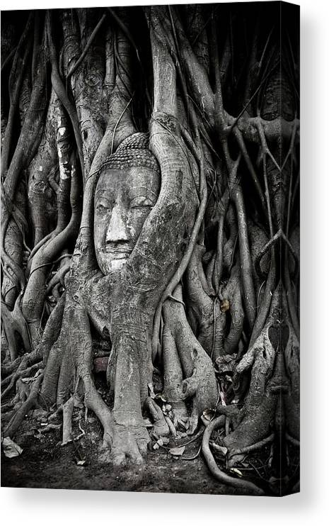 Art Canvas Print featuring the photograph Buddha Head Wrapped In A Tree by Traveler1116