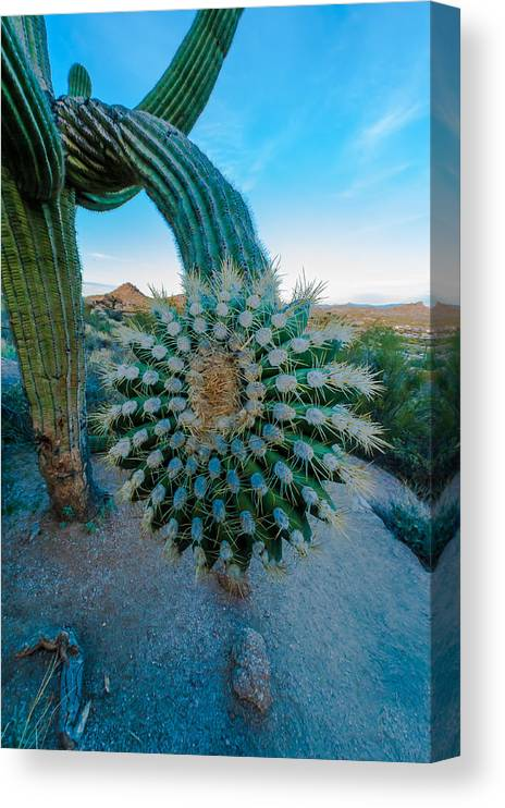 Nature Canvas Print featuring the photograph Cactus With A Twist by Paul Johnson