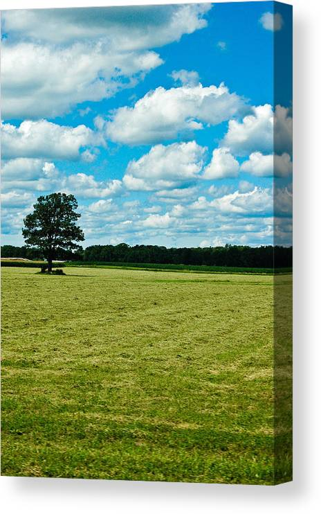 Tree Canvas Print featuring the photograph Country Horizons 1 by Rhonda Barrett
