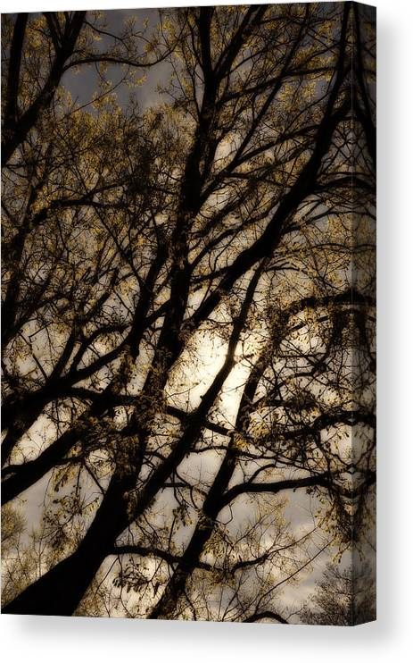 Tree Canvas Print featuring the photograph Dreaming of Night by Todd Hartzo