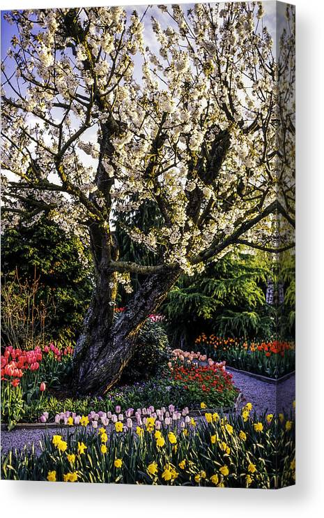 Tranquility Canvas Print featuring the photograph Glorious Spring Blooming, Stanley Park, Vancouver, British Columbia, Canada by Pierre Longnus