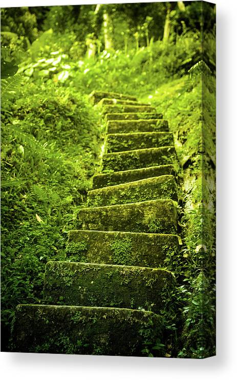 Tropical Rainforest Canvas Print featuring the photograph Green Stair by Pixalot