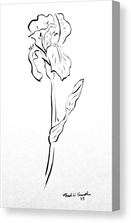 Abstract Canvas Print featuring the drawing Iris II by Micah Guenther