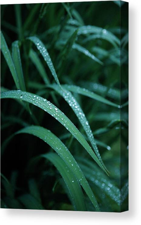 Tranquility Canvas Print featuring the photograph Raindrop by Seiji Nakai