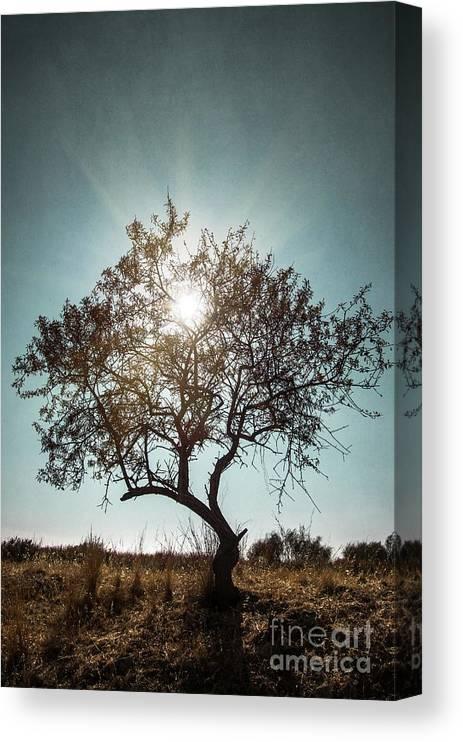 Dark Canvas Print featuring the photograph Single Tree by Carlos Caetano
