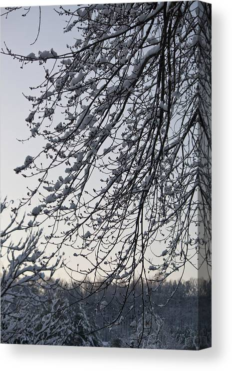 Snow Canvas Print featuring the photograph Snow Covered Branches by Teresa Mucha