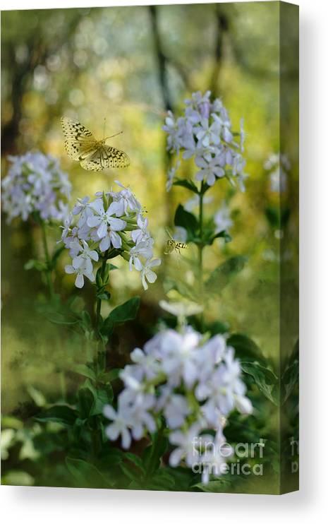 Summer Magic Canvas Print featuring the photograph Summer Magic by Beve Brown-Clark Photography