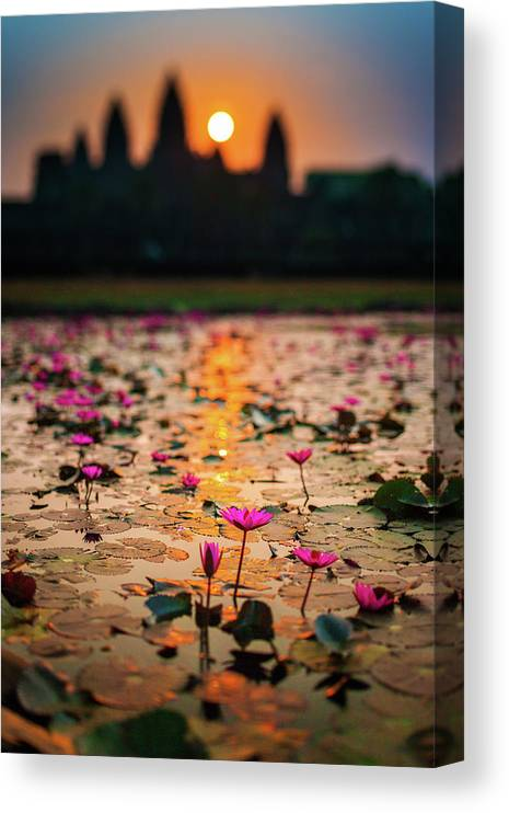 Tranquility Canvas Print featuring the photograph Sunrise Over The Lotus Flowers Of by © Francois Marclay