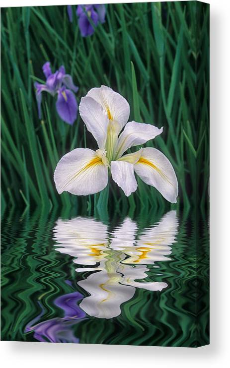 Flower Canvas Print featuring the photograph White Iris by Keith Gondron