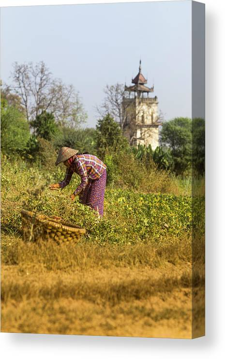 Three Quarter Length Canvas Print featuring the photograph Woman Weeding At Nanmyin Tower by Merten Snijders