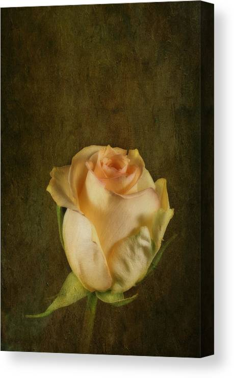 Flower Canvas Print featuring the photograph Yellow Rose by Keith Gondron