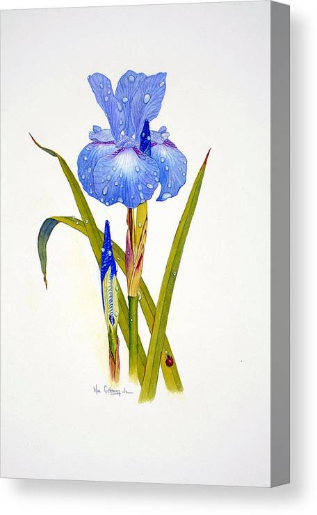 Flowers Canvas Print featuring the painting Japanese Iris by Bill Gehring