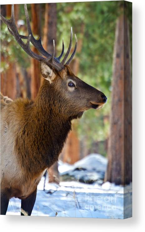 Home Decor 5 Pieces Mountain Bull Elk Pictures Animal Deer Posters