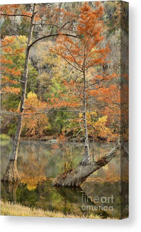 Landscape Canvas Print featuring the photograph Cypress Trees in the Morning Light by Iris Greenwell