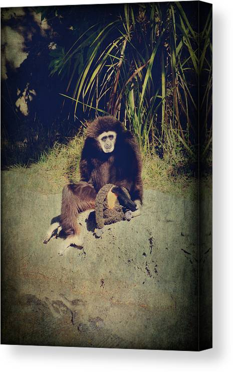 Primates Canvas Print featuring the photograph I Need A Hug by Laurie Search