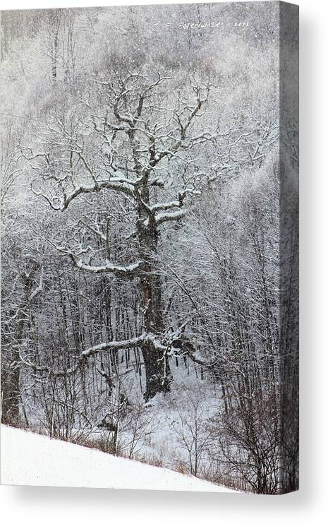 Trees Canvas Print featuring the photograph Old Oak Tree by Carolyn Postelwait