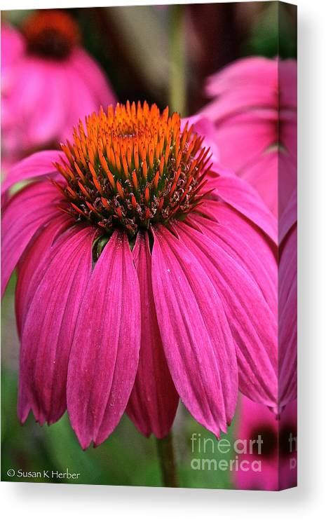 Plant Canvas Print featuring the photograph Wild Berry Purple Cone Flower by Susan Herber
