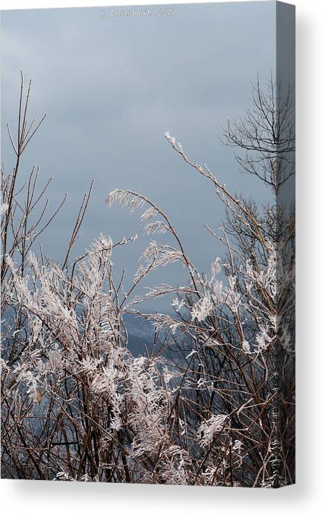 Ice Canvas Print featuring the photograph Ice Crystals by Carolyn Postelwait