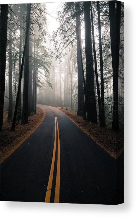 Mount Tamalpais Canvas Print featuring the photograph Across the forest by Matthew Ronder-Seid