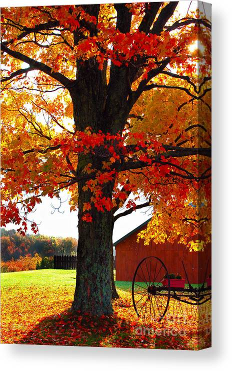 Berry Canvas Print featuring the photograph Adirondack Color Show by Diane E Berry