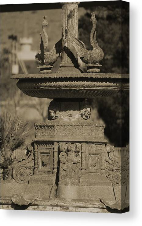 Aged Canvas Print featuring the photograph Aged and Worn Swan Statues on Rustic Cast Fountain by Colleen Cornelius