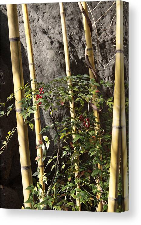 Bamboo Canvas Print featuring the photograph Bamboo by Linda A Waterhouse