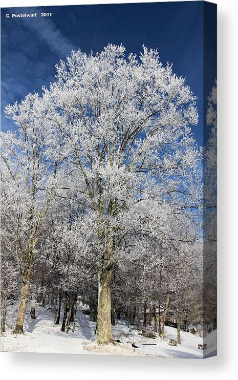 Sky Canvas Print featuring the photograph Blue Sky and Ice Trees by Carolyn Postelwait