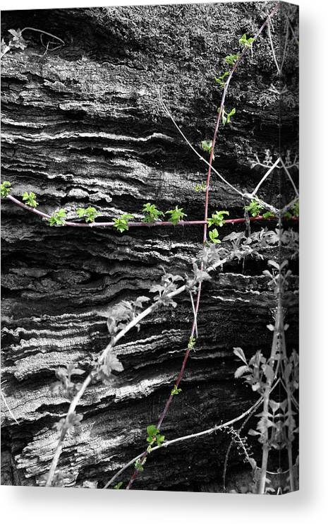 Color Desaturation Canvas Print featuring the photograph Crossing Paths by Dylan Punke