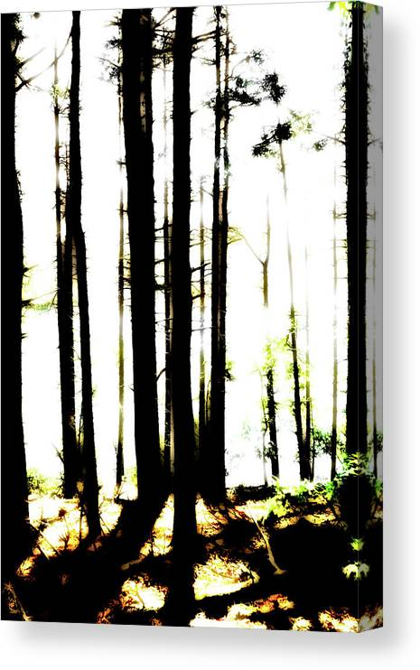 Bright Canvas Print featuring the photograph Dawn in the woods by Corey O'Hara