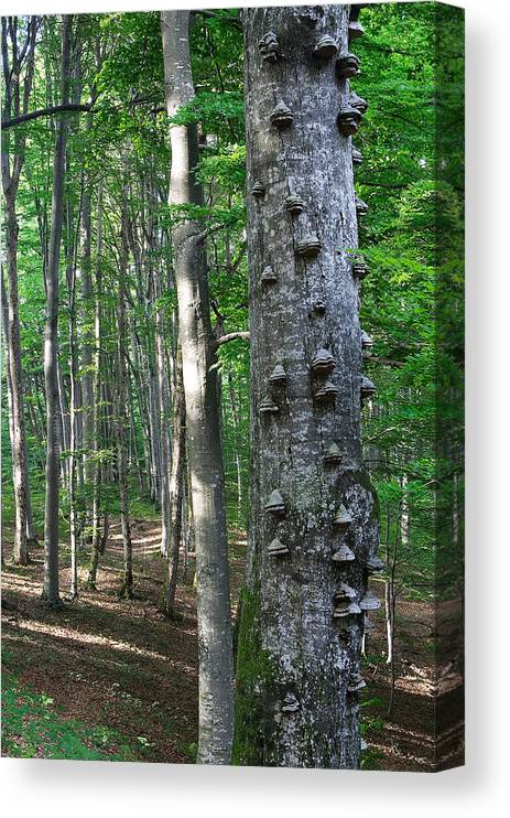 Forest Canvas Print featuring the photograph Forest by Elisa Locci