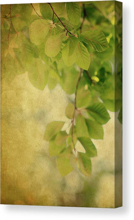 Leaves Canvas Print featuring the photograph Golden by Rebecca Cozart