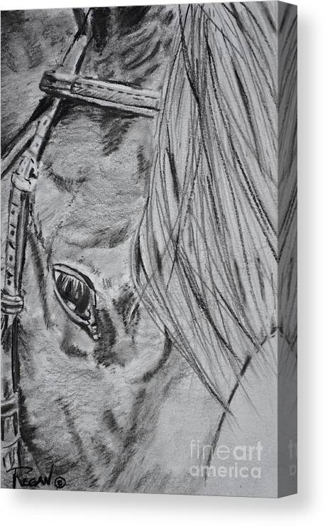 Horse Head Canvas Print featuring the drawing Horse by Regan J Smith