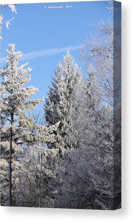 Trees Canvas Print featuring the photograph Ice Covered Pine Trees by Carolyn Postelwait