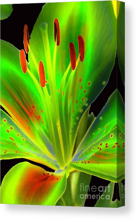 Diane Berry Canvas Print featuring the photograph Lime Twist by Diane E Berry