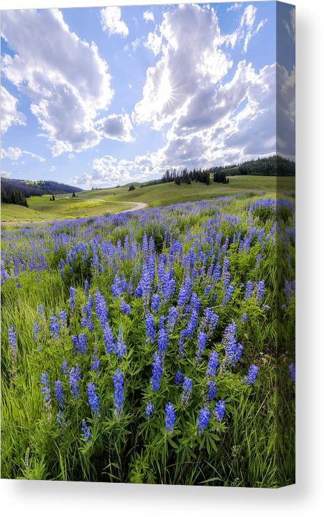Lupine Pass Canvas Print featuring the photograph Lupine Pass by Chad Dutson