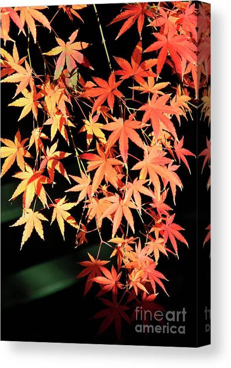 Autumn Canvas Print featuring the photograph Natural Fire by Dean Triolo