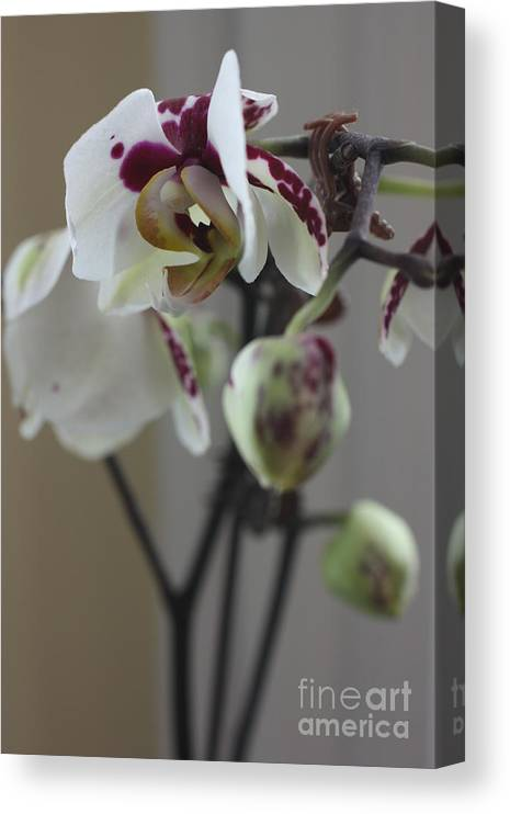 Orchid Canvas Print featuring the photograph Orchid - 100 by David Bearden
