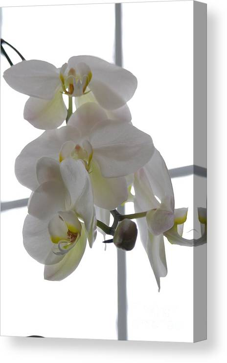 Orchid Canvas Print featuring the photograph Orchid - 101 by David Bearden