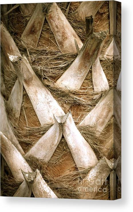 Bark Canvas Print featuring the photograph Palm Tree Bark by Nadine Rippelmeyer