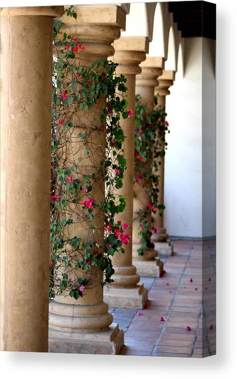 Pink Peacock Canvas Print featuring the photograph Pink Peacock Colored Bougainvillea Blossoms Climbing Pillars Photograph By Colleen by Colleen Cornelius