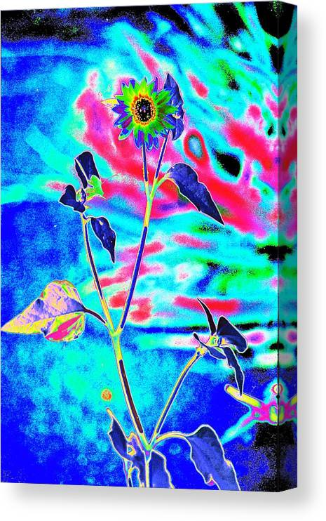 Psychedelicized Daisy Canvas Print featuring the photograph Psycho Daisy by Richard Henne