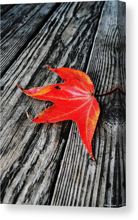 Nature Canvas Print featuring the photograph Red Leaf by Linda Sannuti