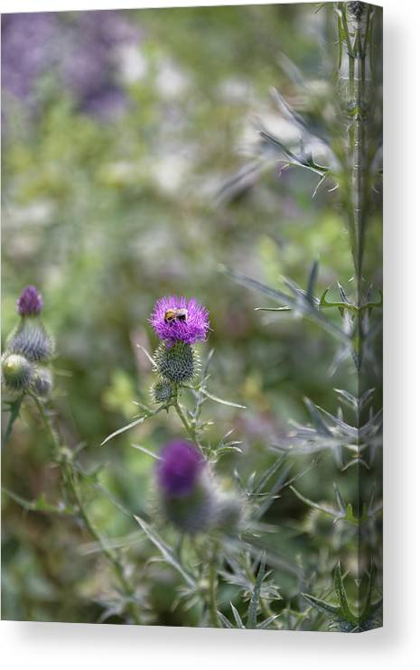 Autumn Canvas Print featuring the photograph Roadside Thistle Bee Polination by Adrian Bud